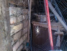a web (I promise to remove it,,,)